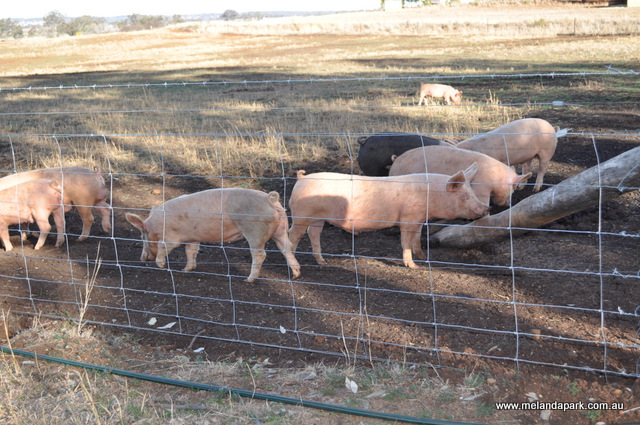 Proof Pasture Raised On Open Fields Fencing For Free