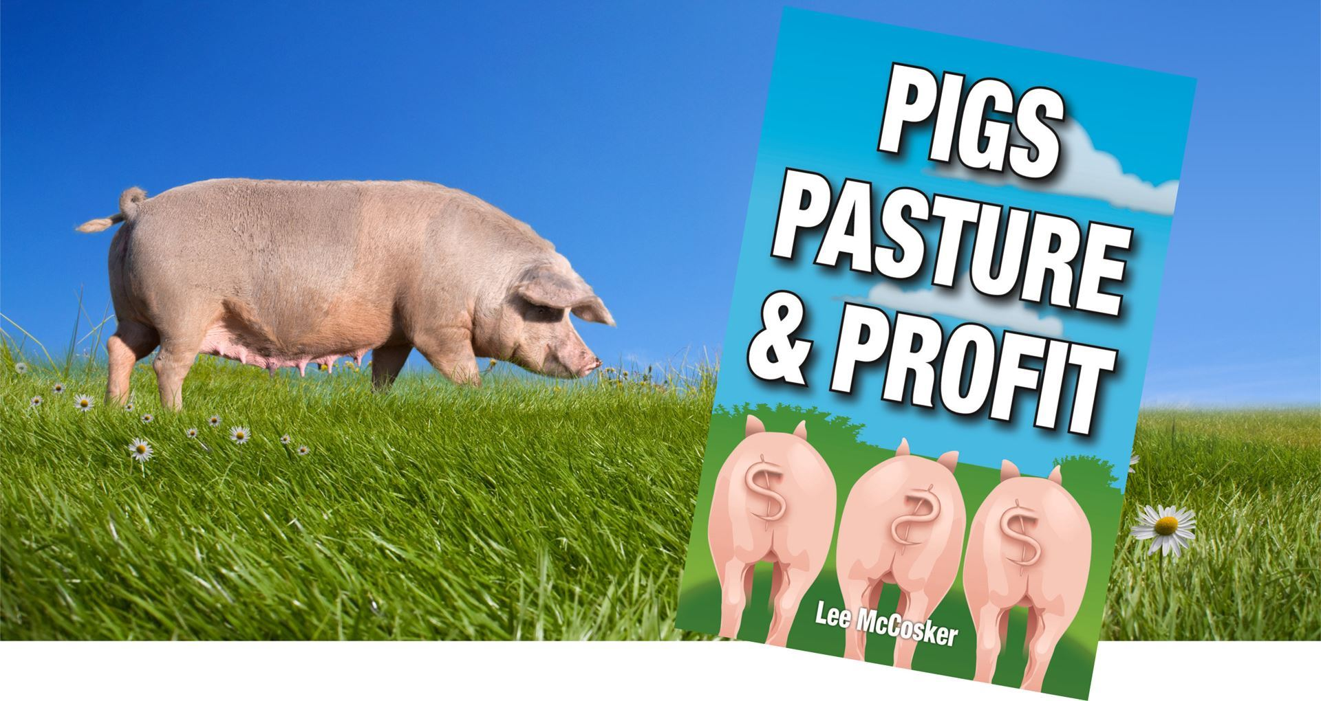 Feeding Free Range Pigs On Pasture